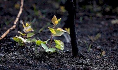 https://www.cyprustodayonline.com/replanting